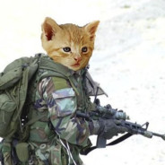 Cat_Soldier