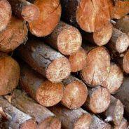 Dřevák