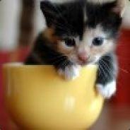 Brony_Kitten