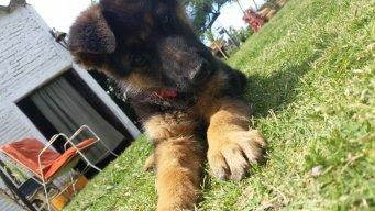 Bruno ツ